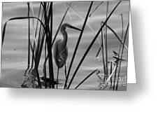 Bw Reflections Greeting Card