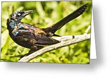 By Beak And Tail It Is A Grackle Greeting Card