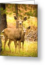 By Mama's Side - Photo Manipulation - Mule Deer - Casper Mountain - Casper Wyoming Greeting Card