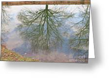 C And O Canal Tree Reflection Greeting Card