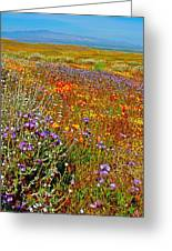 Ca Poppies And Goldfields And Lacy Phacelia And Sage In Antelope Valley Ca Poppy Reserve-california Greeting Card