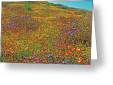 Ca Poppies And Goldfields And Lacy Phacelia In  Antelope Valley Ca Poppy Reserve-california  Greeting Card