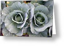 Cabbage Duo Greeting Card