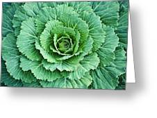 Cabbage Leaves Greeting Card