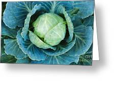 Cabbage Painterly Greeting Card