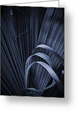 Cabbage Palm No. 3 Greeting Card