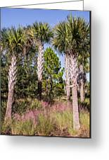 Cabbage Palm Greeting Card