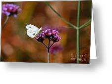 Cabbage White Butterfly In Fall Greeting Card