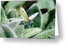 Cabbage White Butterfly In Flight Greeting Card