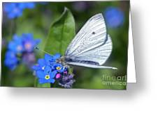 Cabbage White Butterfly On Forget-me-not Greeting Card