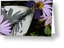 Cabbage White In Shadow Greeting Card