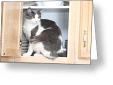 Cabinet Cat Greeting Card