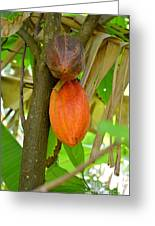 Cacao Greeting Card