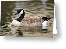 Cackling Goose Greeting Card