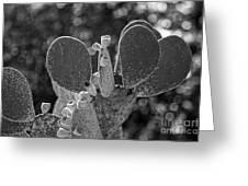 Cacti Bokeh Greeting Card