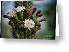 Cacti Bouquet  Greeting Card
