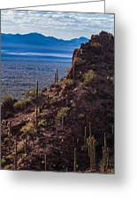 Cacti Covered Rock At Tucson Mountains Greeting Card