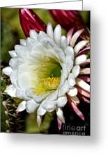 Cacti Flora Greeting Card