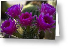 Cacti Flower Bouquet  Greeting Card
