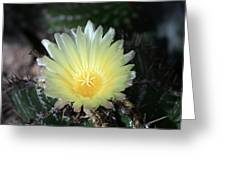 Cacti Flower In White Greeting Card