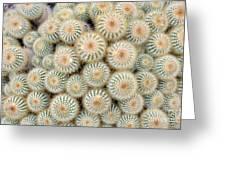 Cactus 35 Greeting Card