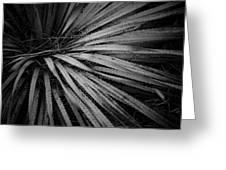 Cactus 5250 Greeting Card