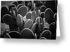 Cactus 5252 Greeting Card