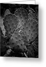 Cactus 5264 Greeting Card