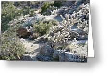 Cactus And Rocks Greeting Card