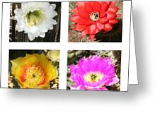 Cactus Blooms Collage Greeting Card