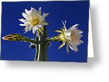 Cactus Blooms Greeting Card