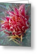 Cactus Blossom 6 Greeting Card