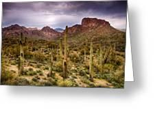 Cactus Canyon  Greeting Card