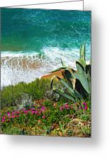 Cactus Coast Greeting Card