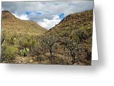 Cactus Everywhere Greeting Card