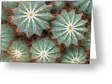 Cactus Family 2 Greeting Card