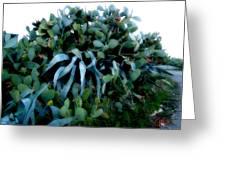 Cactus Family Almeria Region Spain 2013 January Greeting Card