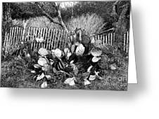 Cactus Fence- Hill Country Texas Greeting Card