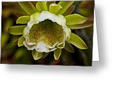 Cactus Flower 1 Greeting Card