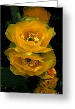 Cactus Flower Song Greeting Card