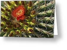 Cactus Flower Greeting Card