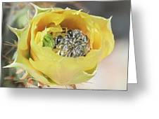 Cactus Flower With Ball Of Bees Greeting Card
