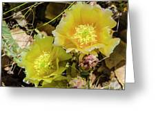 Cactus Flowers, Capitol Reef National Greeting Card