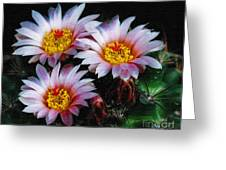 Cactus Flowers With Texture Greeting Card