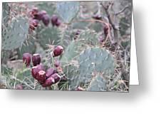 Cactus Fruit Greeting Card