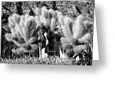 Cactus In Bw Greeting Card