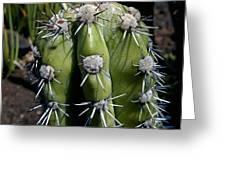 Cactus In Hawaii Greeting Card