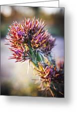 Cactus In Spring Bloom Greeting Card