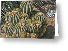 Cactus In The Garden Greeting Card
