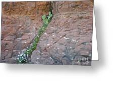Cactus In The Rocks Greeting Card